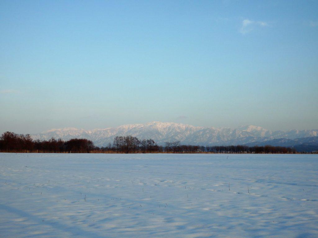 【新潟市内】野鳥が集まる自然公園福島潟への行き方(写真あり)