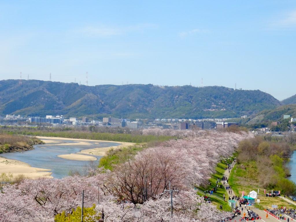 京阪電車でお得に観光!八幡市と伏見の自慢の桜