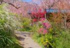 知る人ぞ知る京都の桃源郷「原谷苑」に行ってきた