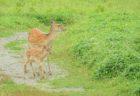 カワイイあり!恐怖もあり…。夏の北海道で出会った野生動物たち