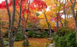 紅に包まれるお庭。紅葉は嵐山の穴場・大河内山荘がオススメ!
