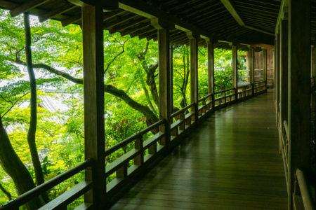 木陰の中を涼やかに散策。青もみじを見るなら永観堂がおすすめ!
