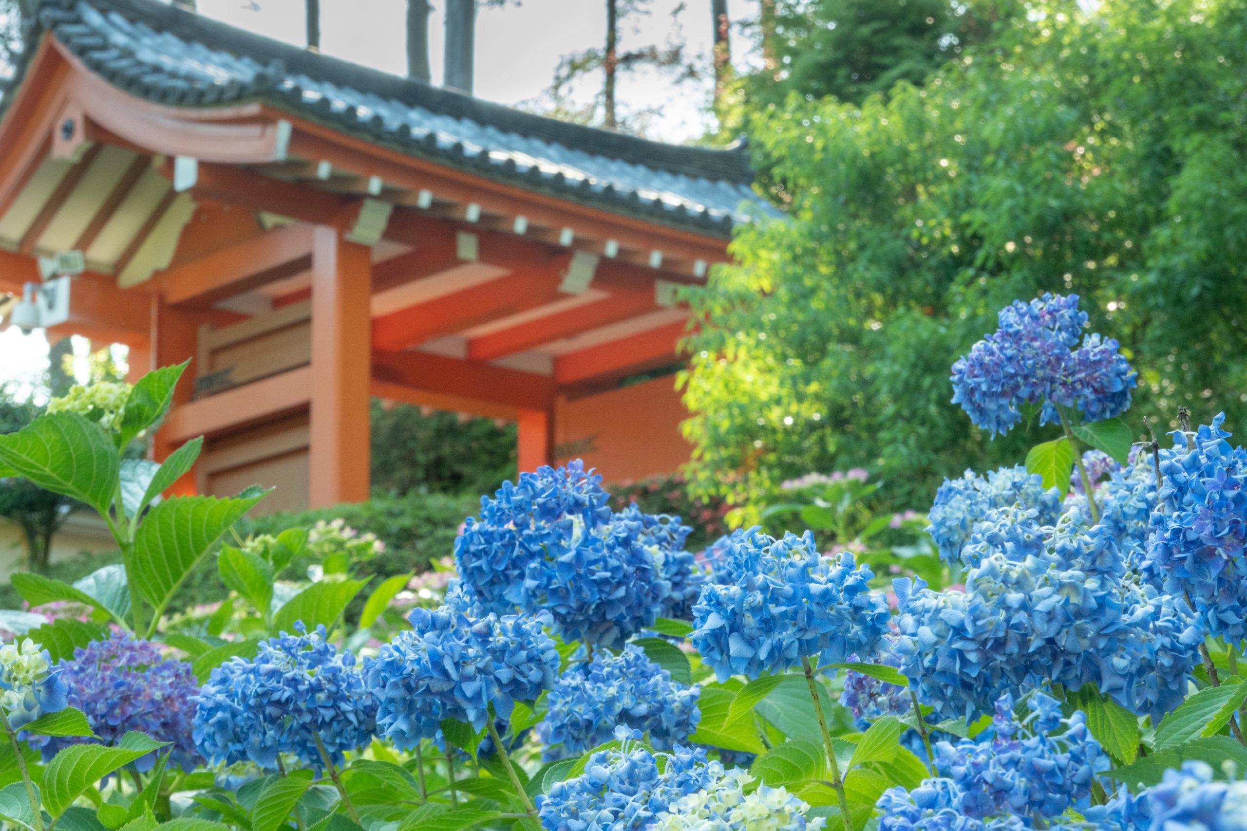 今年もあじさいの季節! 三室戸寺とあじさいパフェのセットを満喫してきた