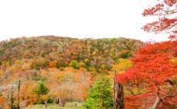雲海・紅葉・星空! 秋の大台ケ原を満喫してきた
