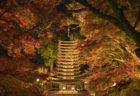 奈良県中部で紅葉ライトアップを見るならここ!秋の談山神社が幻想的だった